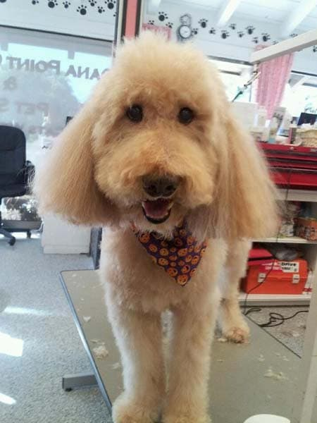 Oc grooming pet spa simply the best 6 solutioingenieria Images